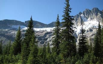 Evergreen trees and snowy mountains